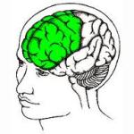Frontal lobes- not fully developed until around age 25.